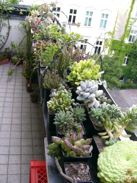 Sukkulenten balkon u2013 Pflanzen für nassen boden ~ 01213229_Sukkulenten Balkon Winterhart